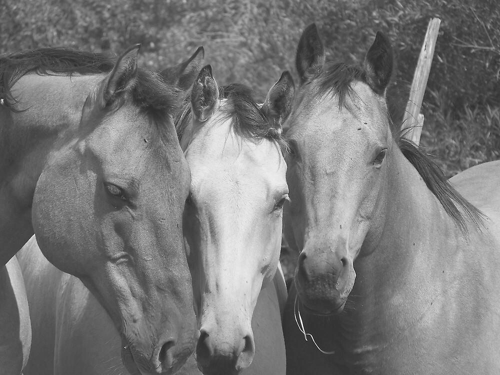 three Amigos by conilouz