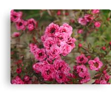 Pink Flower Power Canvas Print