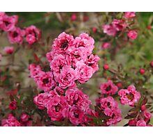 Pink Flower Power Photographic Print