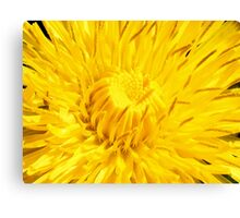 Guess what I am?? Canvas Print