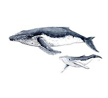 Humpback whale with baby Photographic Print