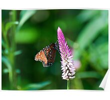 BUTTERLY ON A PRETTY FLOWER Poster