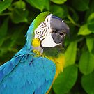 Macaw 1 by MadTogger