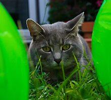 Green eyes by marc melander