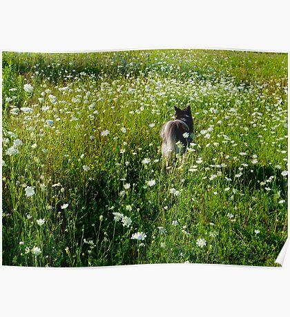 Dog Paradise Poster