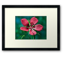 5 RED PEDALS Framed Print