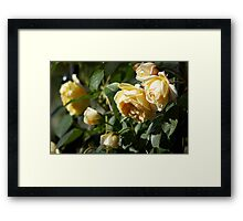 Cluster of Yellow Roses Framed Print