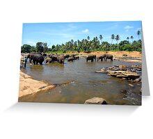 Sri Lankan Elephants Greeting Card