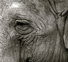 Wise Old Elephant by Lizzylocket