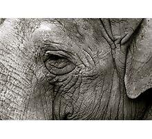 Wise Old Elephant Photographic Print