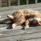 Ohhhhhhh Man! I LOVE The Sun!! by Tracy Wazny