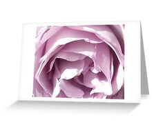 purple rose  soft focus. Greeting Card