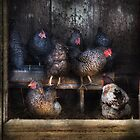 Animal - Chicken - The Hen House by Mike  Savad