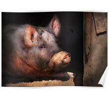 Animal - Pig - Piggy number two Poster