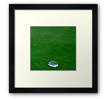 Lily Pad... Up Close & Personal Framed Print