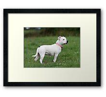 Millie aged 10 months Framed Print