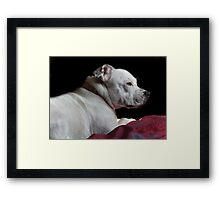 Millie on the bed in the sun Framed Print