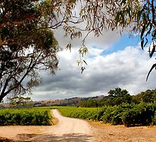 Storm across the vineyard by jwwallace
