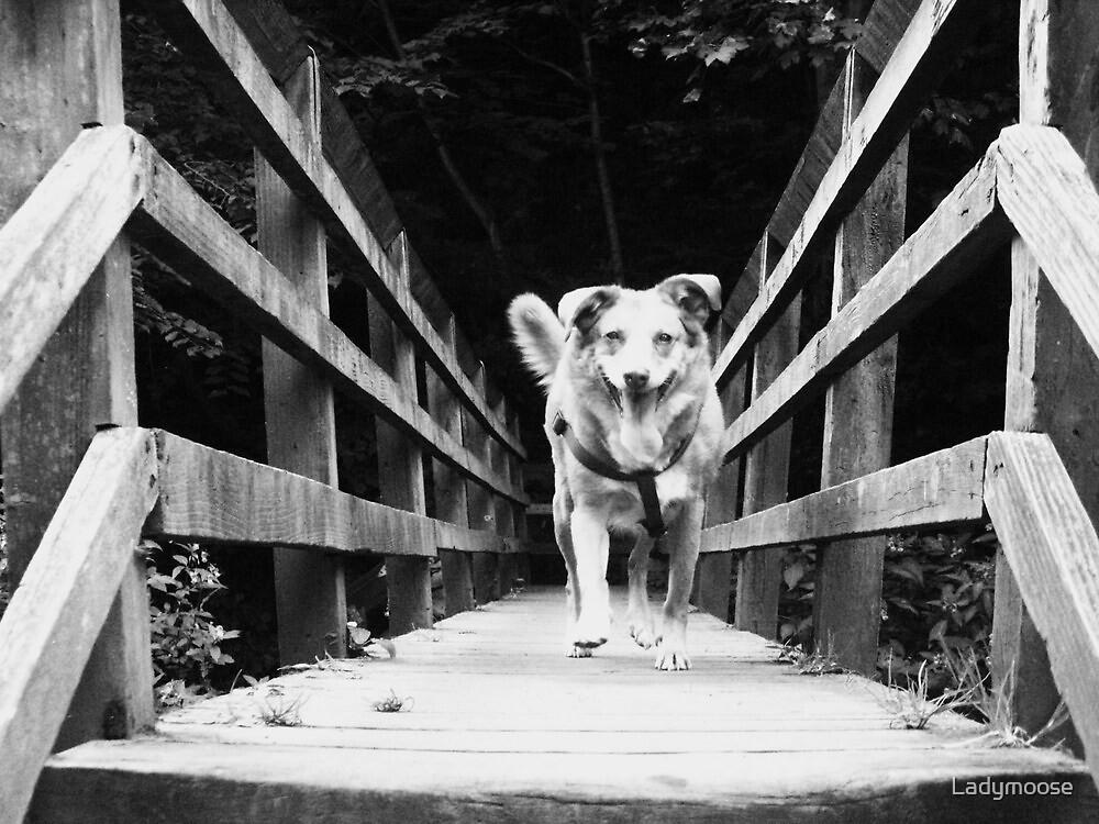 Aint No Trolls Under This Bridge by Ladymoose