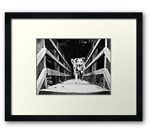 Aint No Trolls Under This Bridge Framed Print