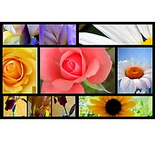 Garden Flowers Collage Photographic Print