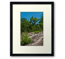 Sandstone Glade Framed Print