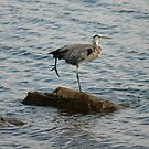 Great Heron by Sean McConnery
