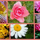 Another Garden Collage by debbiedoda