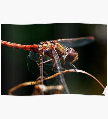 Dragonfly Splendor Poster