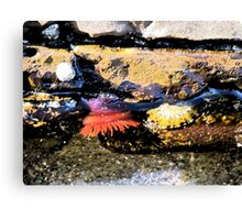 Rockpool at Lorne Beach Canvas Print