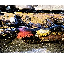 Rockpool at Lorne Beach Photographic Print