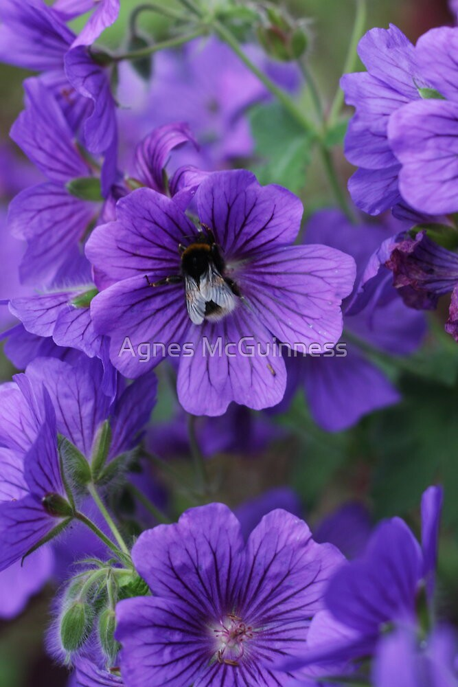A taste for purple by Agnes McGuinness