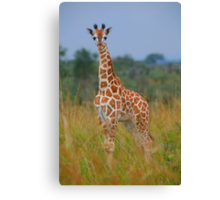 Young Giraffe On Alert Canvas Print