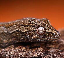Gecko Eye by naturalnomad