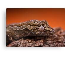 Gecko Eye Canvas Print