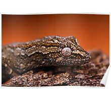 Gecko Eye Poster