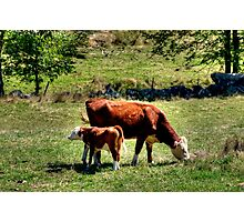 Mother and Baby Photographic Print