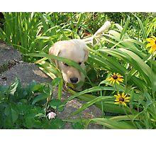 Pokey Little Puppy Photographic Print