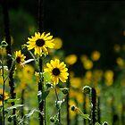 Sunny Side Up  by Vicki Pelham
