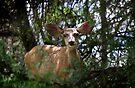 Watching You ~ New Mexico Mule Deer by Vicki Pelham