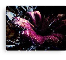 Colour & Lily. Canvas Print