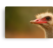 Ostrich Eye Canvas Print