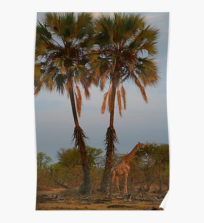 Giraffe Under Palm Trees Poster