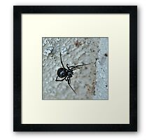 Face-to-deadly Black Widow face Framed Print