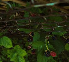 Rasperries by NatalieCollette