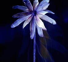 Flower Dream 1 by Clive  Wilson