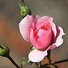 Early Bloomer by JCMPhotos