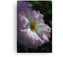 The Face of Love : Gentle Rose Canvas Print
