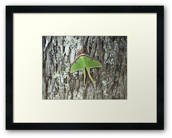 Luna Moth by Nickie Harris