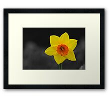 Yellow with a hint of Orange Framed Print